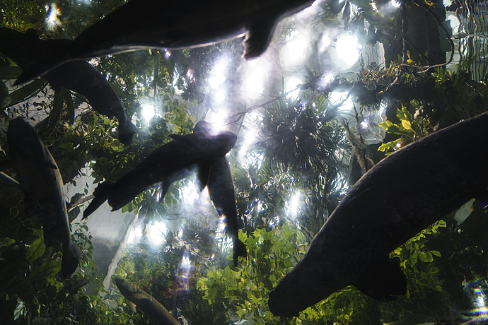 Light Show in Tunnel of Steinhart Aquarium at California Academy of Sciences