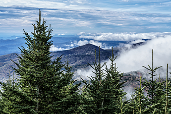 Firs Bracket Mountain Peaks Wreathed in Clouds at Mount Mitchell State Park