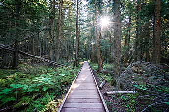 Trail of the Cedars at Glacier National Park